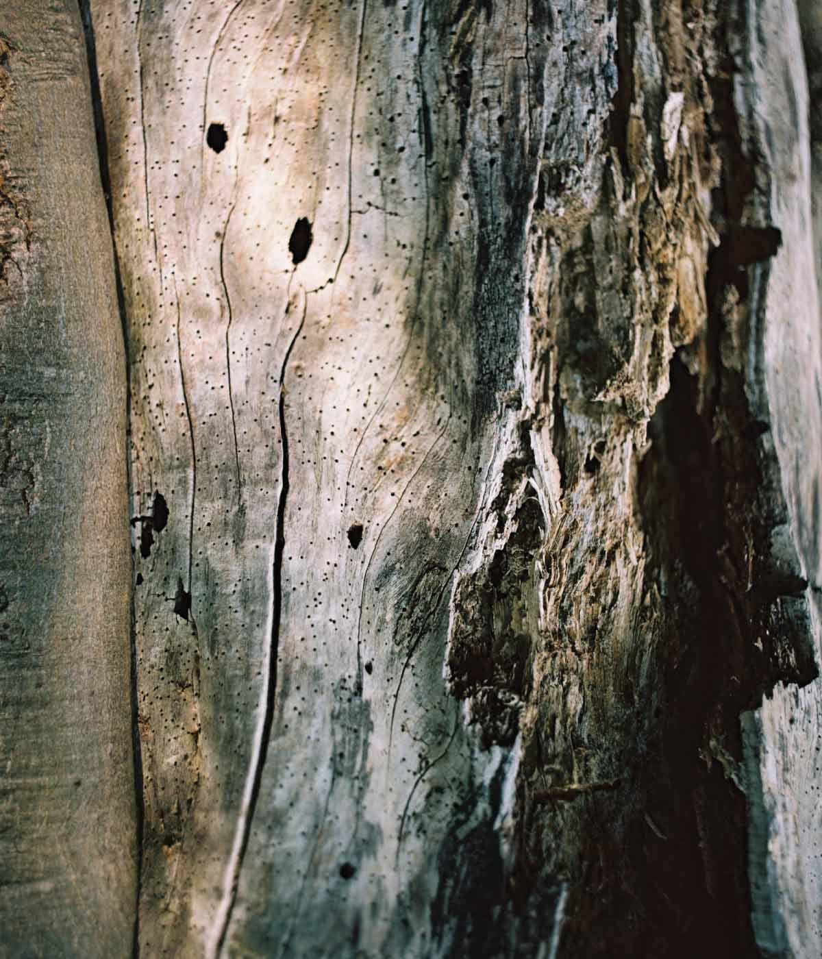 rawness legno parfume brescia botanic