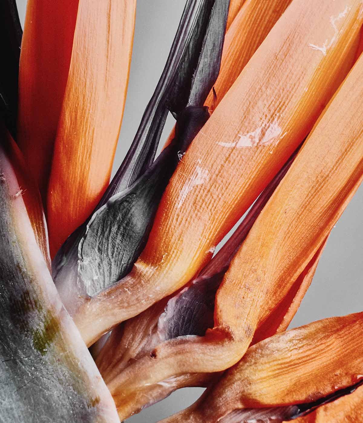 rawnessnaturalparfume bresciaabelodor
