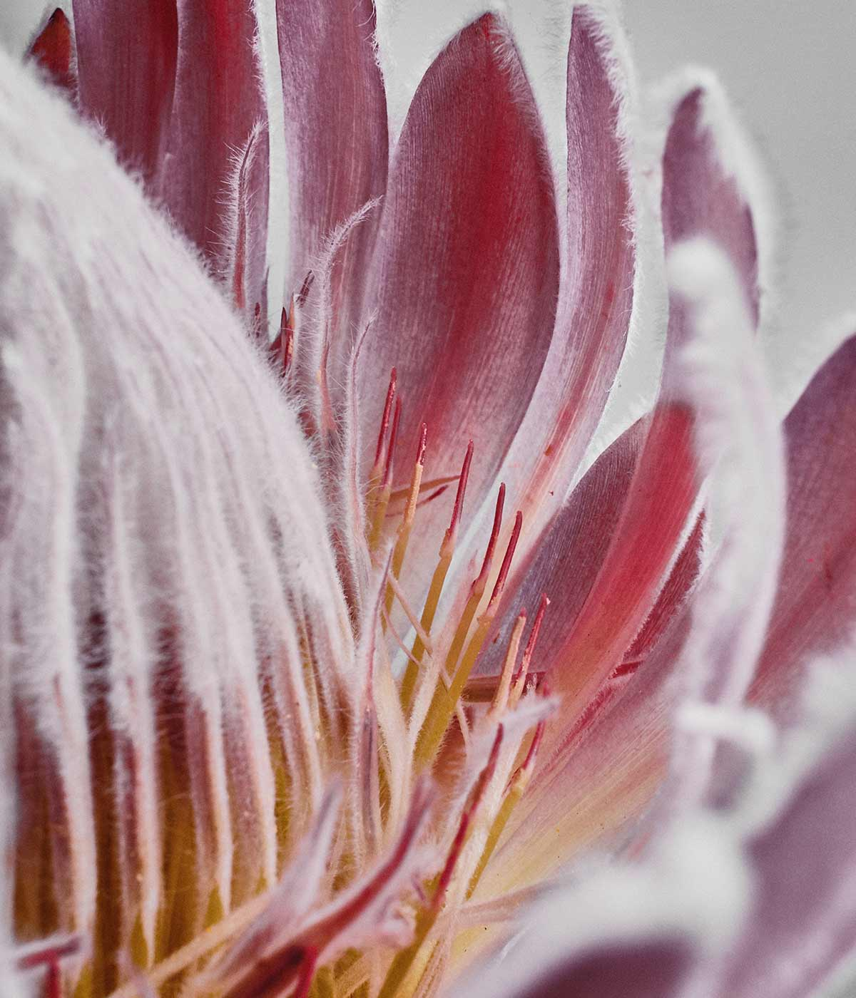 rawness natural parfume brescia pink